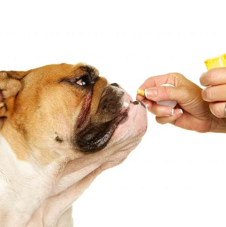 Deworming Medication